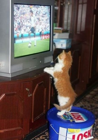 Cat watching telly