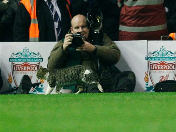 Cat At Anfield