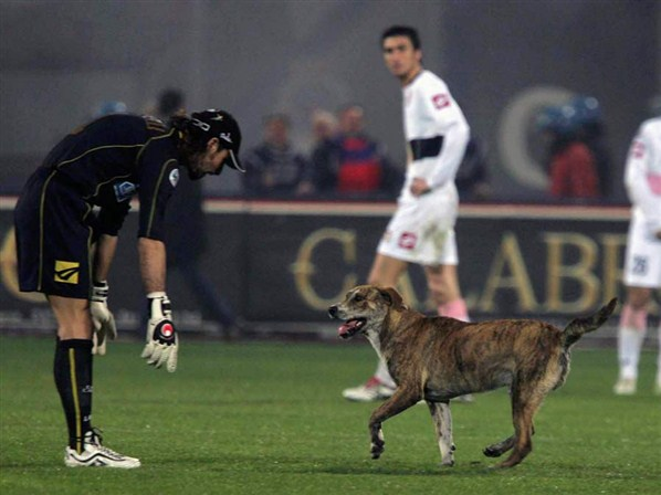 Dog On Pitch